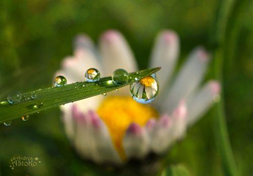 ob_f8d701_daisy-raindrops-ii-by-astoko-d7eay4r