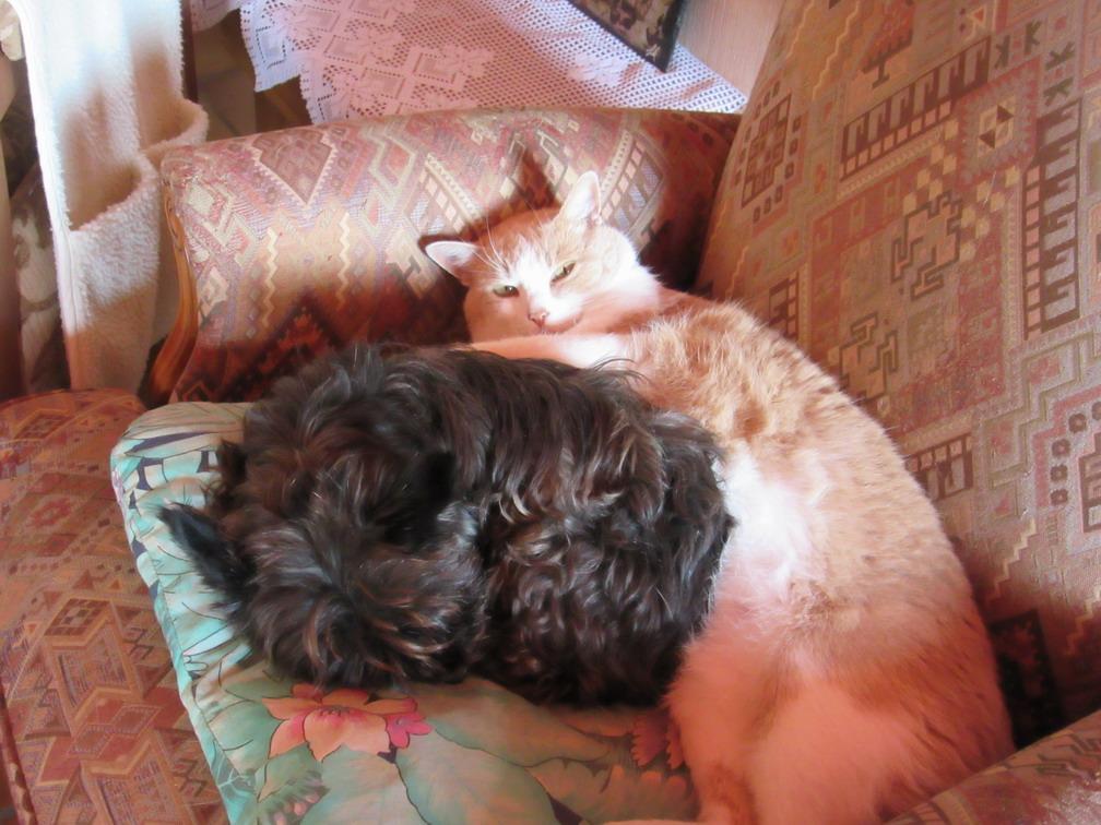 chat chien copains