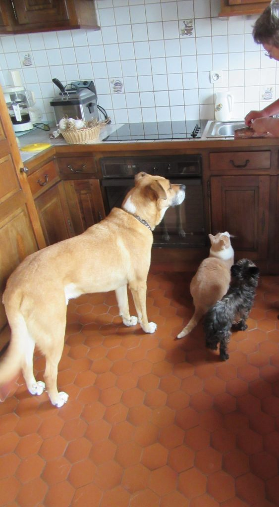 trio chiens, chat